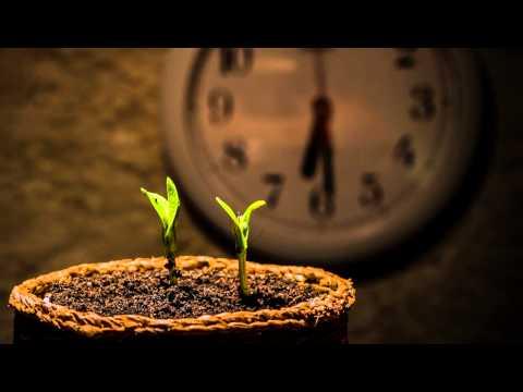 شاهد حركة نمو النبات لـ  3 أيام في 30 ثانية HD