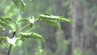 Som de Chuva sem Trovão para Dormir e Relaxar - Sons Relaxantes da Natureza - Sons de Agua
