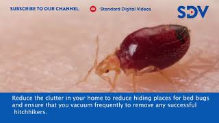 Simple and easy precautions that will  help prevent bed bug infestation in your home