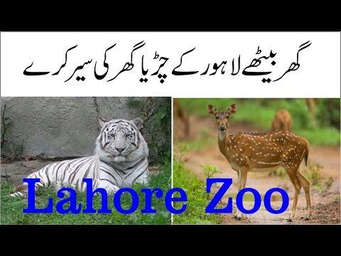 Download Lahore Zoo 3gp Video