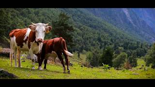 ♫♫♫ Beautiful Places of This Planet in Ultra HD ♥ Russia ♥ Siberia ♥ Altai ♥ Magic music