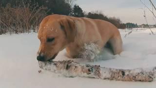 Собака гуляка - улыбака ))))