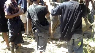 preview picture of video 'Funeral Ceremony in Tana Toraja, Sulawesi, Indonesia - pig handlers'