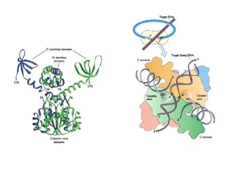 Reverse Transcription and Integration (Lecture 9)