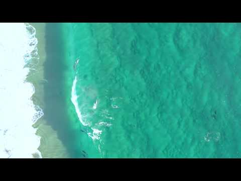 spotting-leopard-sharks-dolphins-and-rays-with-mavic-pro-2