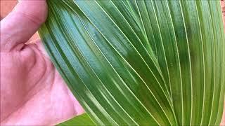 Coconut Tree Care & Update