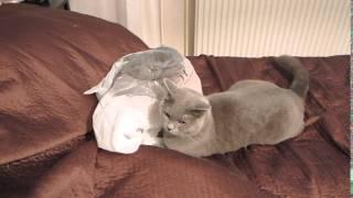 Смотреть онлайн Оживший пакет заставил кота взлететь