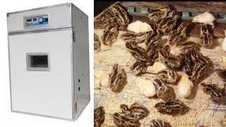 How to make an eggs incubator at home