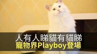 思浩話你知日本出現「寵物界Playboy」!你地又會唔會買翻本俾主子睇?【大家真風騷】
