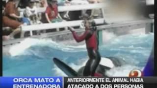 ORCA MATO A ENTRENADORA 25-02-10