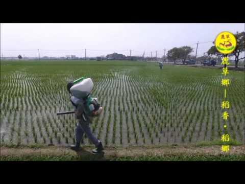 2017.6.28 稻香.稻鄉