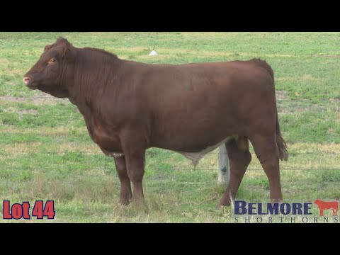 BELMORE OREGON Q155