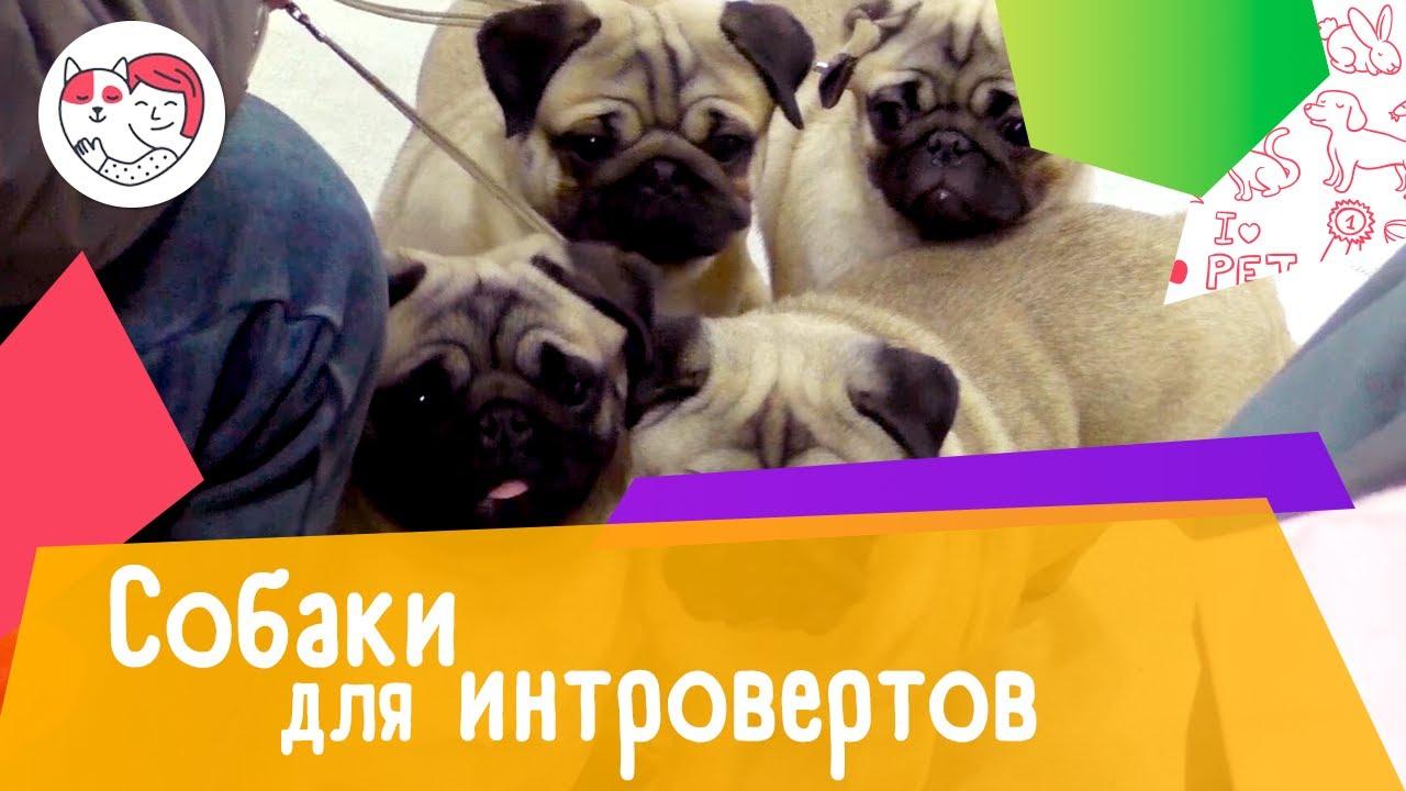 5 пород собак для интровертов