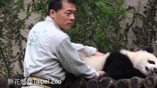 2014-05-04 彪哥觀察圓仔狀況(The Giant Panda Yuan Zai)