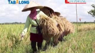 Editorial TV Tabalong Potensi kecamatan di Wilayah Utara Kab. Tabalong