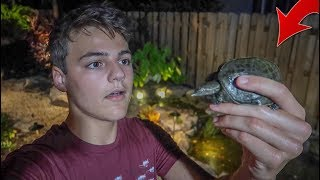 He FOUND a LOST TURTLE in My BACKYARD!!