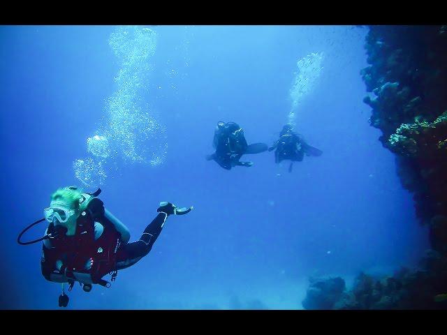 Elphistone Resort - Marsa Alam - Egypt - Reef - diving | Egipt 2016 nurkowanie z 3WILL