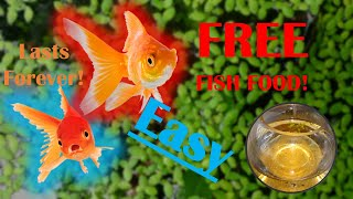 How to grow *FREE* food to feed your goldfish FOREVER! easy