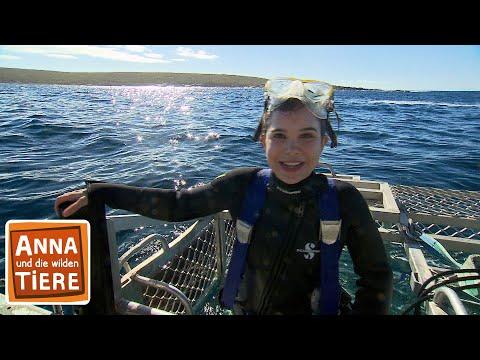 Mit dem Hai unter Wasser (Doku)   Reportage für Kinder   Anna und die wilden Tiere