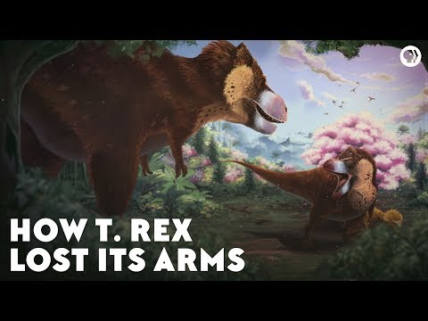 How Did the T-Rex Get Such Tiny Arms?
