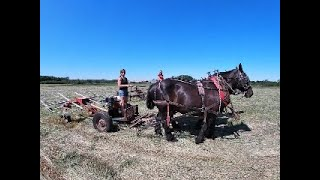 Haying With Draft Horses: Comparing Two Tedders
