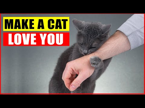 10 Scientific Ways to Make Your Cat Love You More