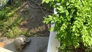 Katze Mimi – Schildkröten