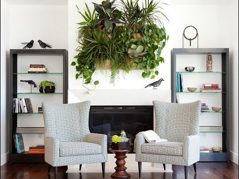 ТОП-10 самых НЕПРИХОТЛИВЫХ ВЬЮЩИХСЯ комнатных растений, фото и названия