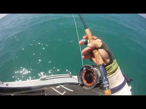 Queenfish, Darwin NT AUstralia