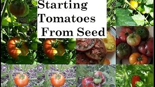 Starting Tomatoes From Seed The Easy Way The Wisconsin Vegetable Gardener