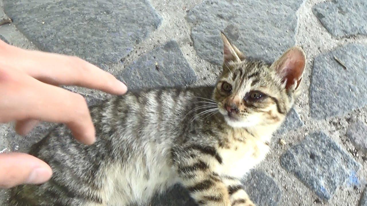 子猫に人間の恐ろしさを教えてやった