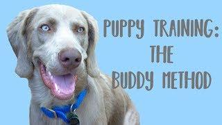 Buddy training with Gunny and Griz