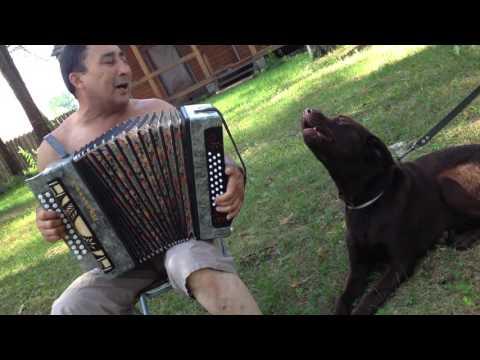 Собачий голос Дым сигарет с ментолом Кирюха  Зорро