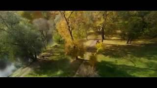 FPV Flying through Autumn park