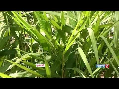Video Herbal plant uses & its medicinal value of sirukurinjan,keelanelli,pirandai | Poovali | News7 Tamil