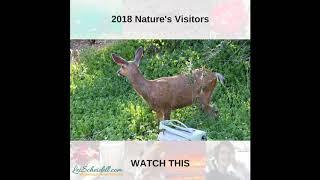 The Deer Teens