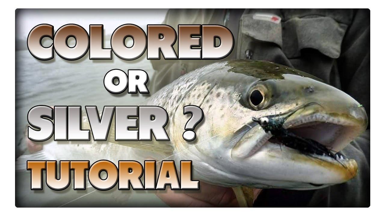 Meerforellen in der Schonzeit - braune und silberne Fische unterscheiden