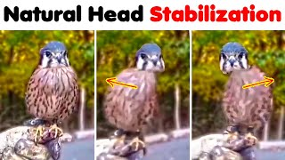 Oddly Interesting Videos