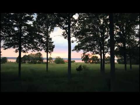 Coldnoise - Dreams & Reality