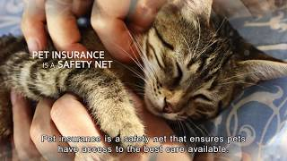 Pet Insurance - Prepare for the unexpected