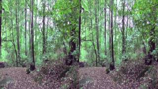 preview picture of video 'Naturpark Bautzen 3D'