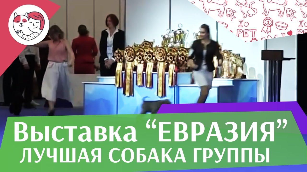 Лучшая собака 2 группы по классификации FCI 18 марта на Евразии 17 ilikepet