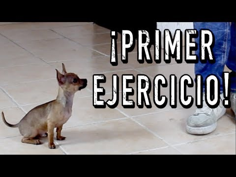 El PRIMER ENTRENAMIENTO de un perro CACHORRO - MartGon