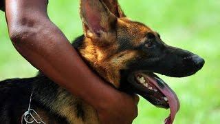 Dog Training In Kerala🐕🐶🐕 [sajan Dog Training ]09946515222