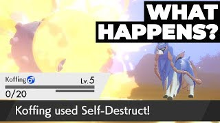 What Happens If You SELF-DESTRUCT In The Beginning Legendary Battle Of Pokémon Sword & Shield?