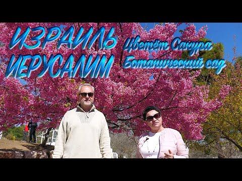 , title : 'Израиль | Иерусалим | Цветёт сакура | Ботанический сад|  Israel | Jerusalem | Sakura blossoms