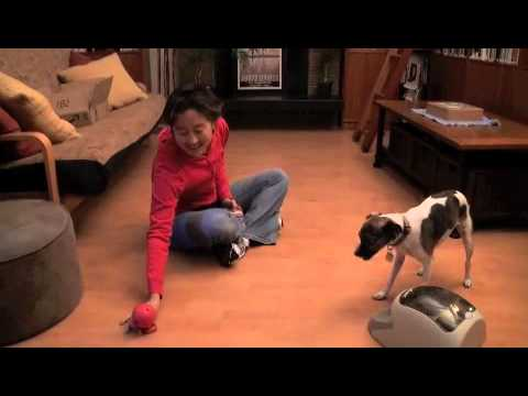 How to Train a Dog to Play Fetch