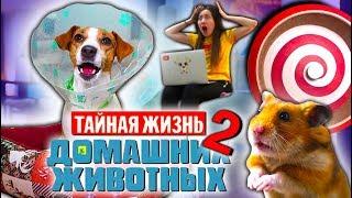 НОВАЯ ТАЙНАЯ ЖИЗНЬ Домашних Животных 2 Собака Джина и Хомяк Эдди | Elli Di Pets