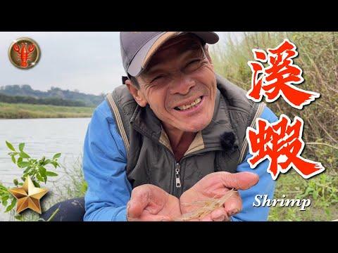 野味二六集 | 溪蝦 | 放蝦籠 | 鹹酥溪蝦 | 萍哥Pinger