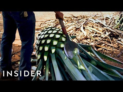This is How Tequila is Made
